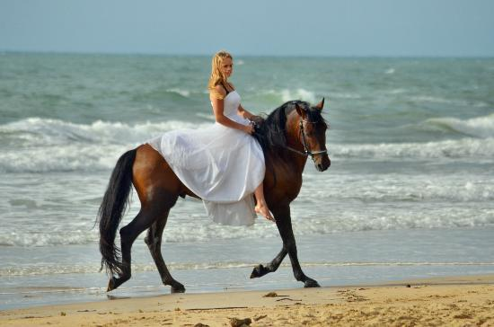 Castaways Resort & Spa Mission Beach: How romantic!  The perfect setting for your beach wedding ... horses an optional package extra!
