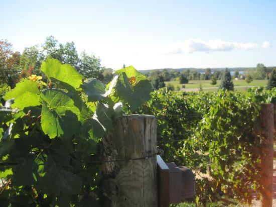 Bowers Harbor Vineyards: Vineyard