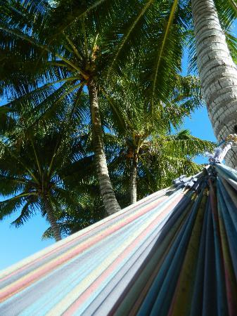 Bella Beach Bungalows: view looking up from my hammock