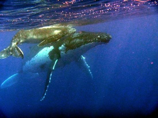 Treasure Island Eueiki Eco Resort : Gorgeous Whales
