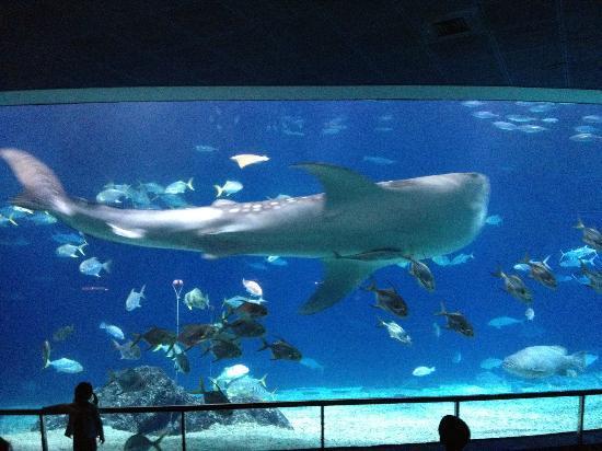 Rodadero Sea Aquarium and Museum : National Museum of Marine Biology and Aquarium: Aquarium 2