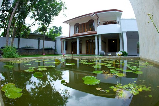 Clove Villa: Front Garden