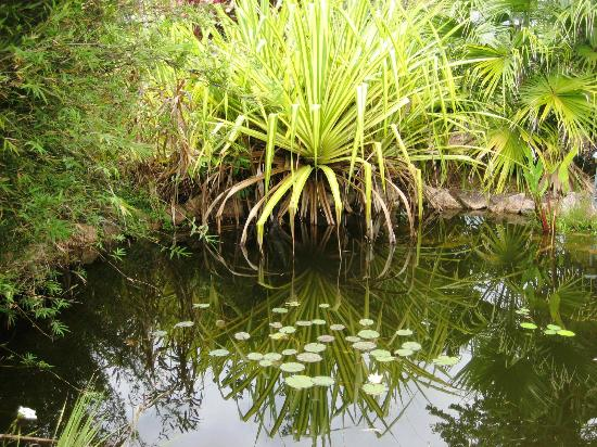 Mena Creek Eco Gardens: The tranquil pond near the Pavillion