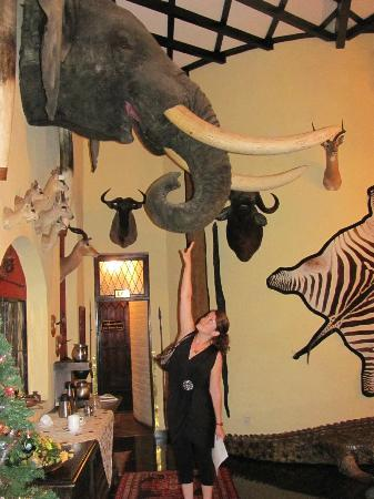 Trophy Room - that was one MASSIVE elephant...poor thing.