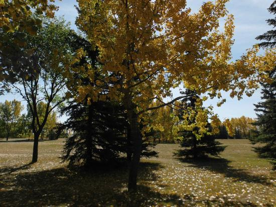 North Glenmore Park : Fall In The Park