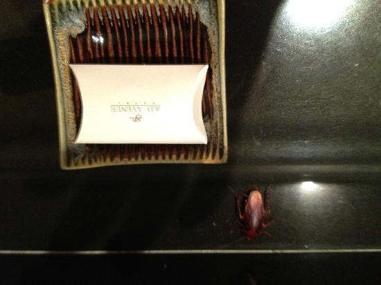 S.D.  Avenue Hotel: Cockroach1