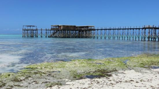 Essque Zalu Zanzibar : Jetty View from Beach