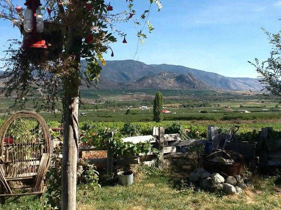 Penticton Sunshine and Wine day tours: Another view from one of the vinyards