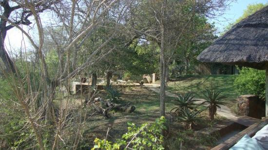 Thornybush Game Lodge: The lodge grounds and swimming pool