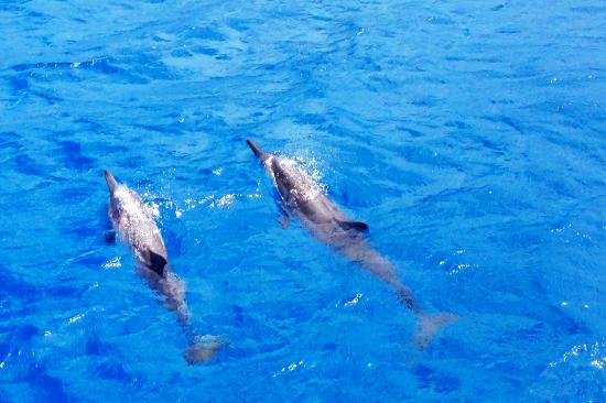 Ocean Joy Cruises: We saw SO many dolphins and BABY DOLPHINS!