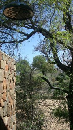 Thornybush Game Lodge: View from the outdoor shower