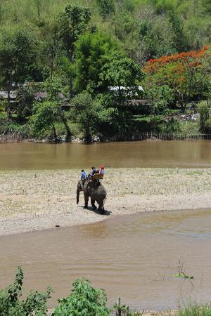 Le Meridien Chiang Rai Resort: Elephant and Buddha Tour