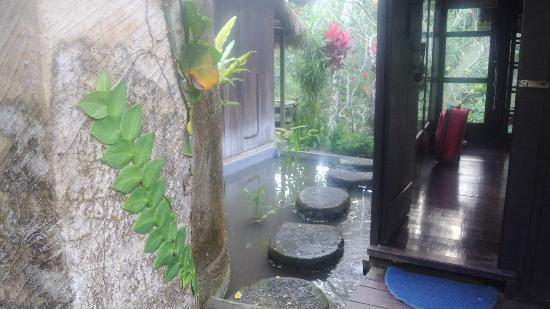 Ubud Sari Health Resort: here is my room water garden view