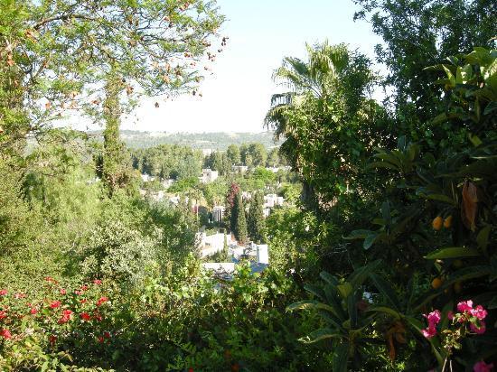 Ba Choresh HaTivi: View from the garden