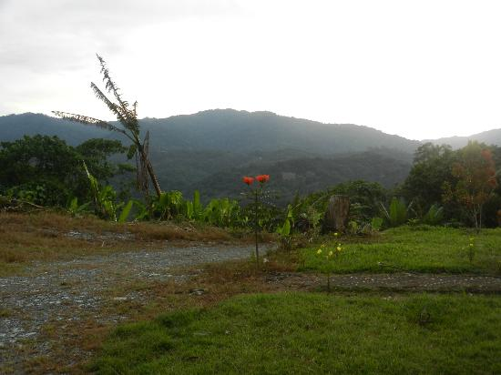 Sabah Tea Garden: More lovely views!