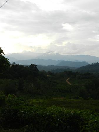ساباه تي جاردين: The views