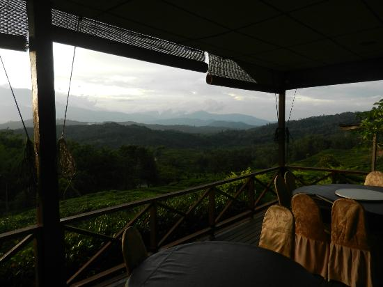 Sabah Tea Garden: View from the dining area