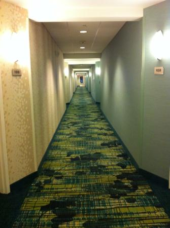 SpringHill Suites Hartford Airport/Windsor Locks : hallway