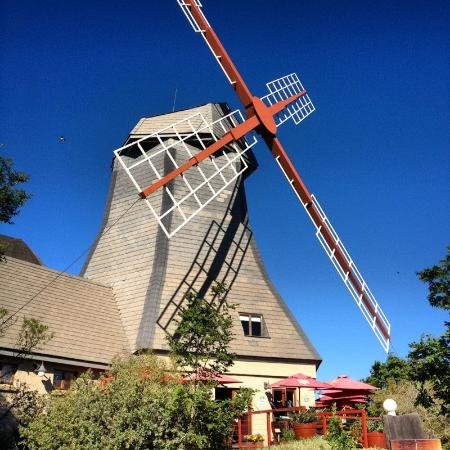 Huppelepup Guesthouse: WindMill Farm - tourist attraction 500m from the guesthouse