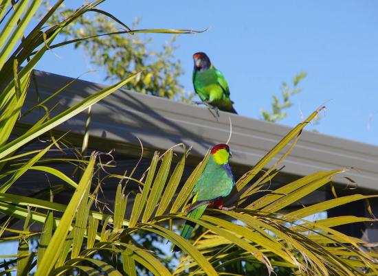 Baudins of Busselton: Wildlife at breakfast time