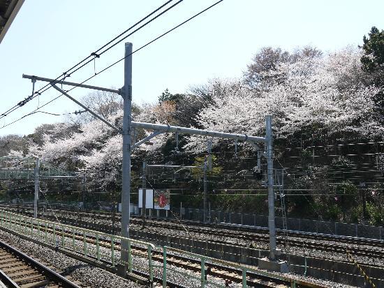 Asukayama Park: 王子駅より