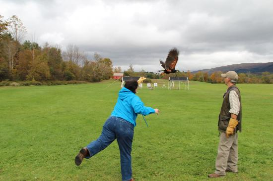 Green Mountain Falconry School: My wife casting out the hawk.