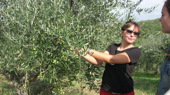 ‪‪Tuscan Wine Tours by Grape Tours‬: Marialuisa talks about the olive trees