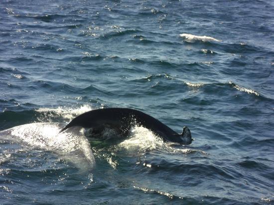 Dolphin Fleet Whale Watch: whale