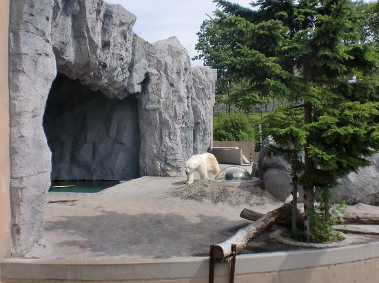 しろくま - Picture of Asahiyama Zoo, Asahikawa - TripAdvisor