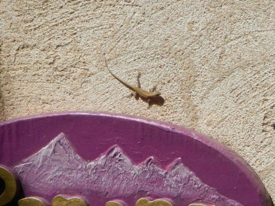 Tlaquepaque Arts & Crafts Village: Lizard