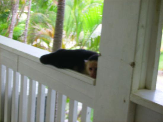 Fantasy Island Beach Resort: just one of three friendly monkeys