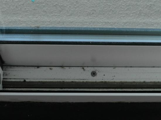 Embassy Suites by Hilton Hotel Monterey Bay - Seaside: dead mosquitoes inside the living room/sliding door