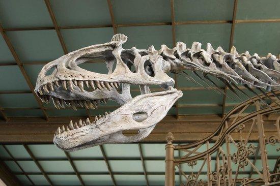 Museo de Ciencias Naturales: Provided by: Muséum des Sciences Naturelles