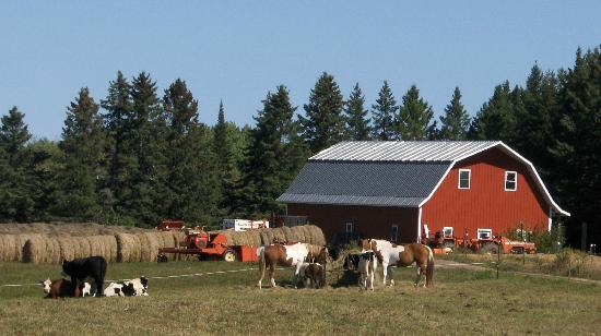 Second Wind Country Inn: Barn, Horses, and Cows