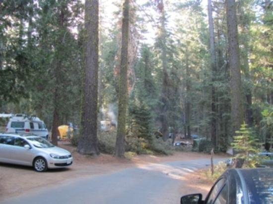 Crane Flat Campground: 400 loop
