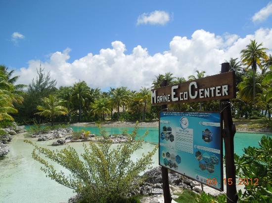 The St. Regis Bora Bora Resort: para visitar y nadar con los peces