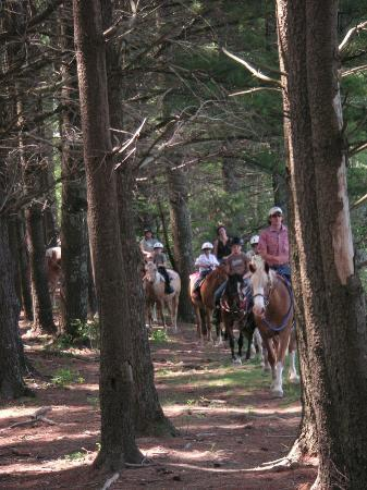 Arrowmont Stables: Horse Ride Through The Pines