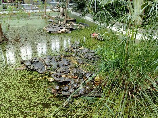 Laghetto con tartarughe dentro la stazione di atocha for Laghetto tartarughe inverno