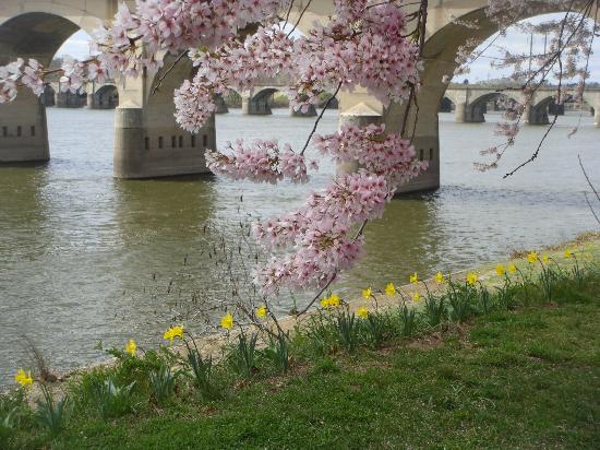 Quality Inn Riverfront: Spring time along the Riverfront