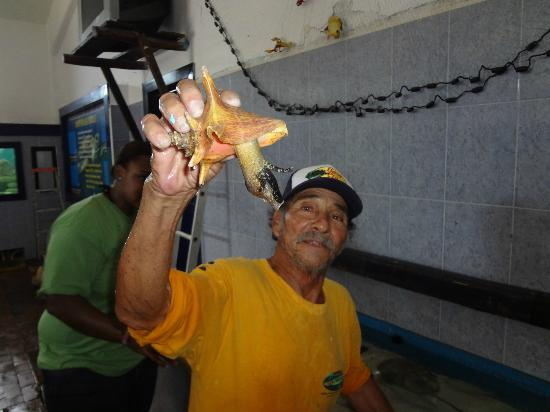 Tortugranja (Turtle Farm): conch