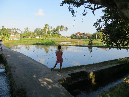 Four Seasons Resort Bali at Sayan: Flooded rice paddies, seen on guided bike ride