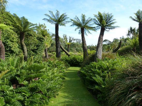 Logan Botanic Garden The Tree Ferns At