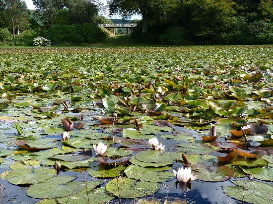 Castle Kennedy Gardens: The Lily Pond