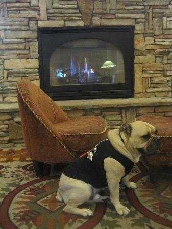 The Lodge at Sierra Blanca: The Lobby offers up a crackling fireside setting to toast a pup's toes by!e h