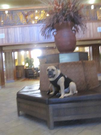 MCM Elegante Lodge & Suites: Talk about a comfy Lobby setting! Travelin' Jack gives it the paws up rating!