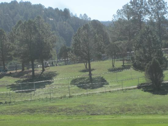 The Lodge at Sierra Blanca: Dog Park is located directly behind the hotel.