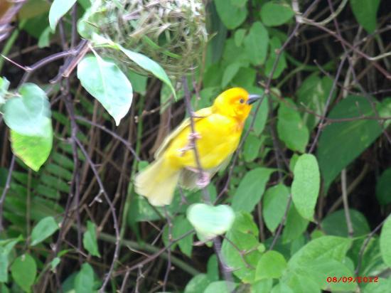 Voyager Beach Resort : Weaver Birds around the hotel