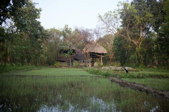 Kumbura Eco Lodge: The view with the paddy fields 