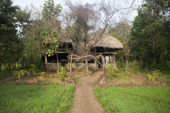 Kumbura Eco Lodge: view from the paddy fields