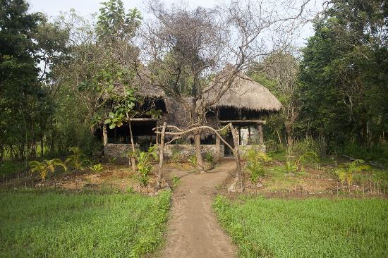Kumbura Eco Lodge: view from the paddy fields 